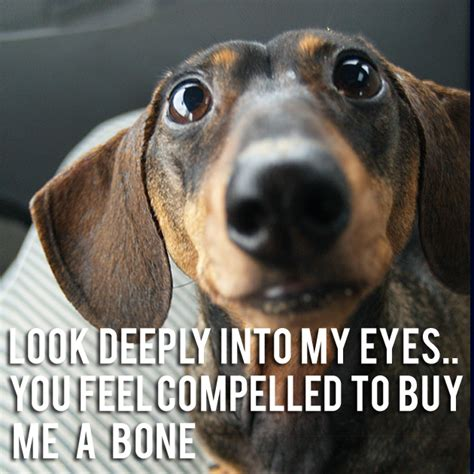 How To Keep Dog From Barking by Weiner Dog Funny Quotes Quotesgram