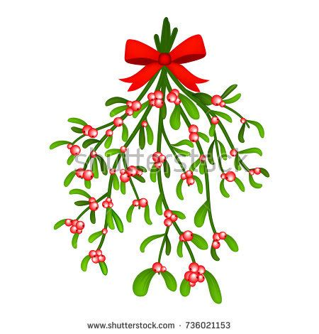 branch mistletoe berries red bow bouquet stock vector