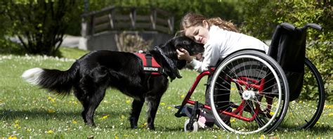 assistance dogs international international assistance week floofins co
