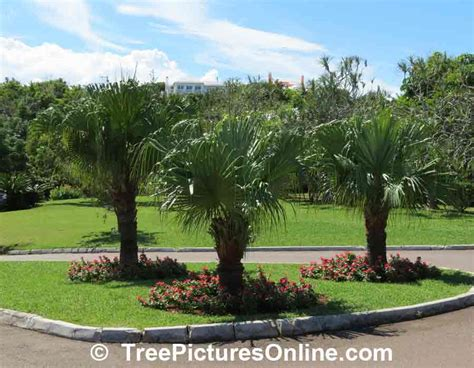 palm tree landscape design photo treepicturesonline