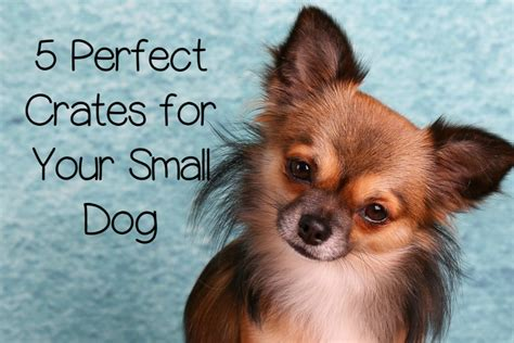 crate small breed puppies 5 of the best crates for small dogs that you ve been looking for dogvills