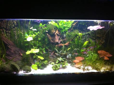 Aquarium 80 Cm By Arlicho herinrichting 80cm aquarium