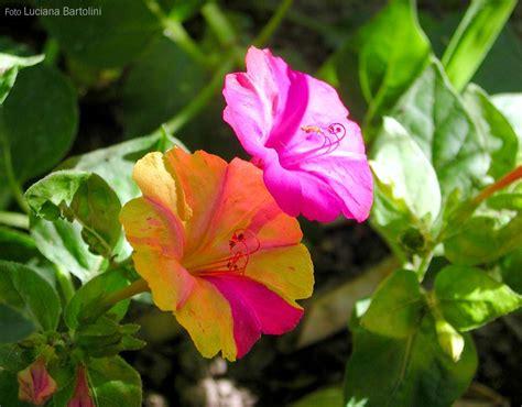 linguaggio segreto dei fiori dizionario never say book il linguaggio segreto dei fiori il