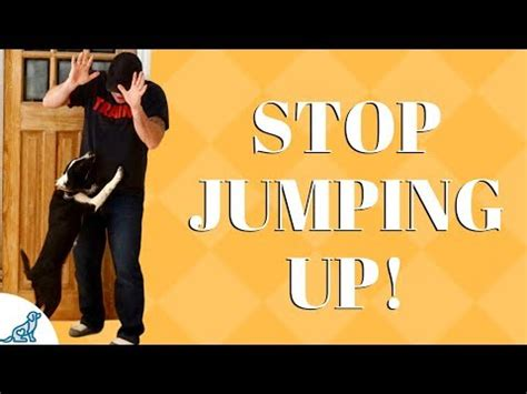Stop From Jumping On by How To Stop Your From Jumping Up On At Your