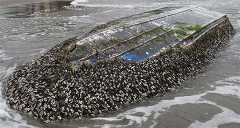 japanese fishing boat from tsunami creatures raft across pacific thanks to tsunami earth