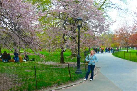 central park ls que faire 224 central park