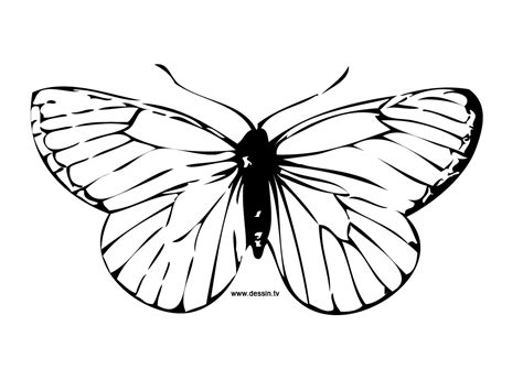 free coloring pages of butterfly wings