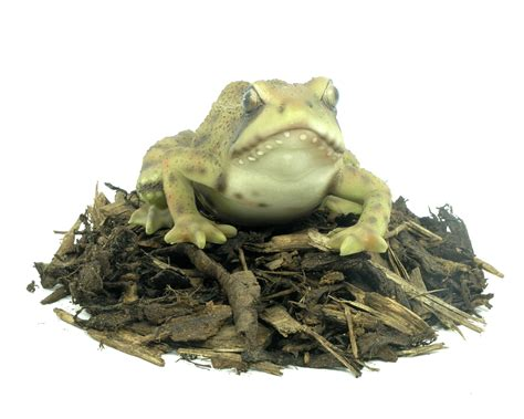 frog garden frog resin garden ornament 163 7 59 garden4less uk shop