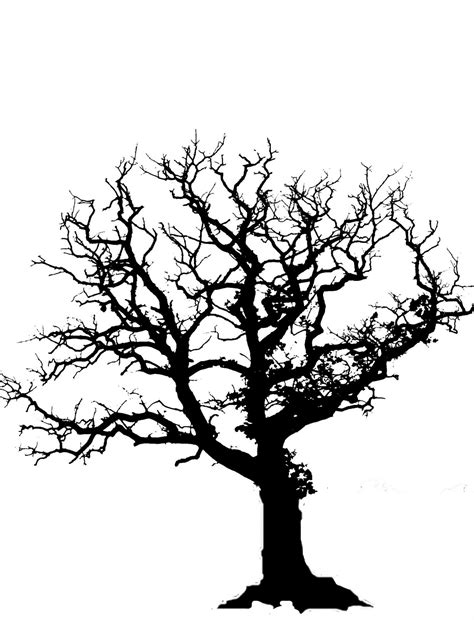 tree branches silhouette clipart best