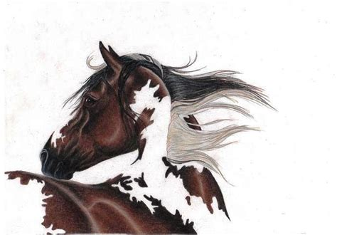 mustang horse drawing mustang horse drawings in pencil www imgkid com the