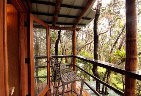 awesome airbnb treehouses    rent