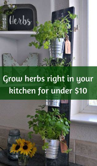 grow herbs in kitchen 25 beautiful kitchen herb gardens ideas on pinterest