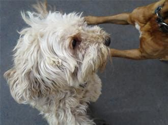 aggressive puppy behavior behavior problems aggressive dogs only want to be loved owners connection