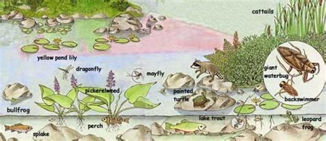 the biology of lakes and ponds biology of habitats series books northern ponds lakes underwater