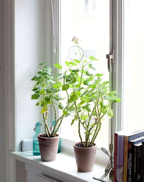 Plants For Windowsill by 352 Best Windowsill Plants Images On