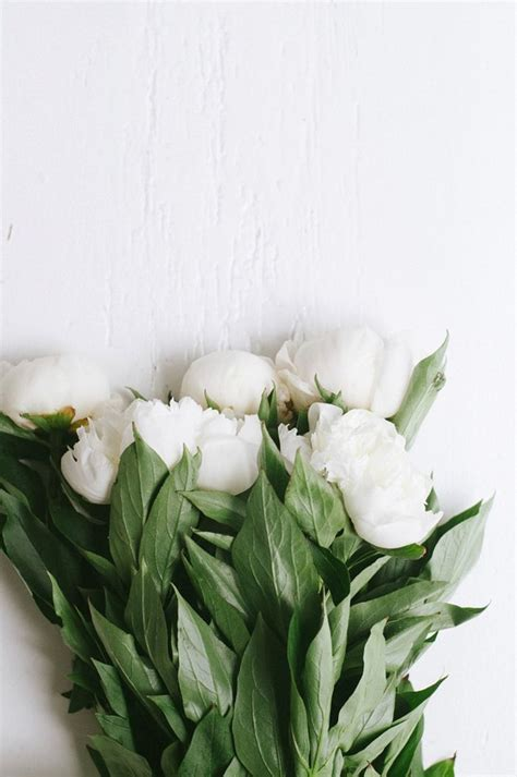 5 Beautiful White Things by White Peonies Garden Flowers