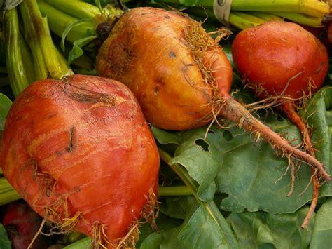 colored root vegetable - Colored Root Vegetable