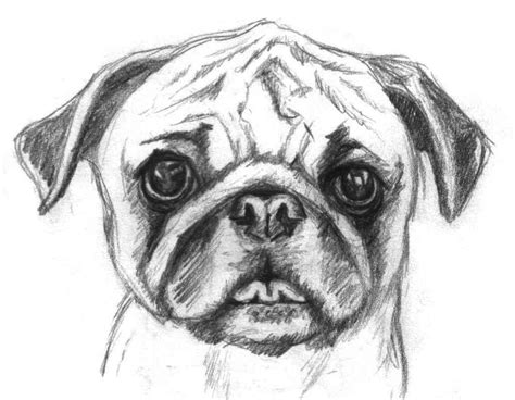 Sketches I Can Draw by Pug Coloring Page Pencil And In Color Pug