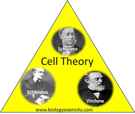 three contributions to the theory of books cell and development biology week 4 topic 4 cell