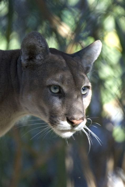 everglades wildlife images everglades national park  national park service
