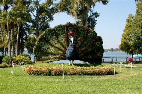 Cypress Gardens Florida by Panoramio Photo Of Topiary At Cypress Gardens Adventure