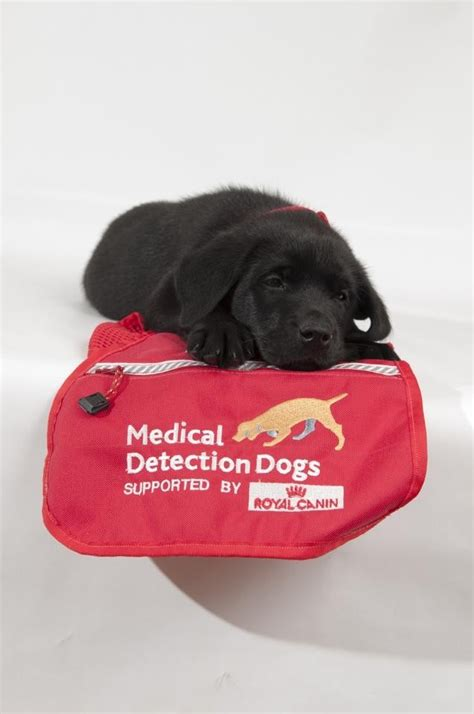 dogs detect cancer these dogs save lives by smelling s breath