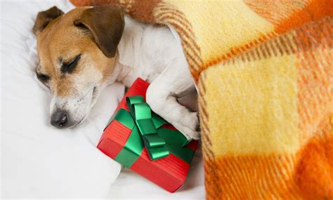 10 great christmas gifts for pet owners pets center at