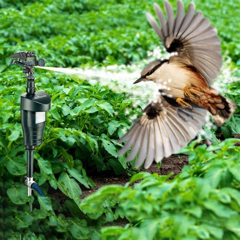 Repulsif Pour Chat Jardin by Jardin Animaux R 233 Pulsif 201 Pouvantail Pest Jet Spray