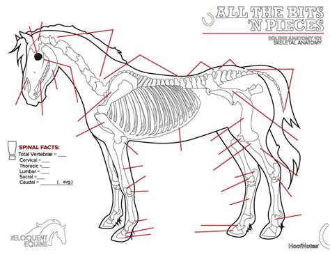 horse skeleton coloring page beautiful horse coloring pages horse skeleton coloring page