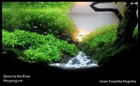 result ippa expo aquascaping contest 2011 indonesia