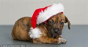 theme names for litter of puppies the 12 dogs of christmas rehoming centre launches festive