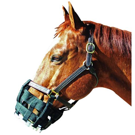 Cribbing Muzzles For Horses by Best Friend Cribbing Muzzle Gregrobert