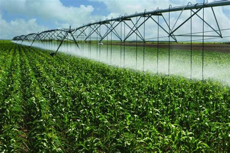 irrigated corn water management beats precision fertilizing on irrigated