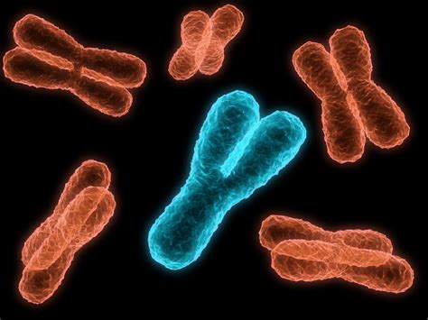 Don't Mourn the Y Chromosome | DiscoverMagazine.com Y Chromosome