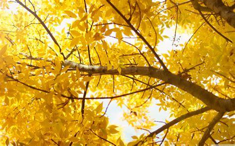 yellow  hd desktop wallpaper  wide ultra