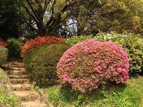 koishikawa botanical garden koishikawa botanical gardens picture of the