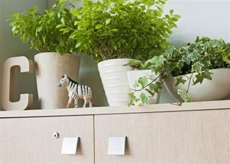 Plants Above Kitchen Cabinets | plants above cabinets kitchen pinterest