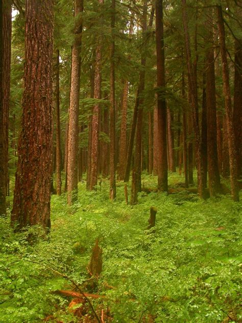 10 most amazing and beautiful forests in the world