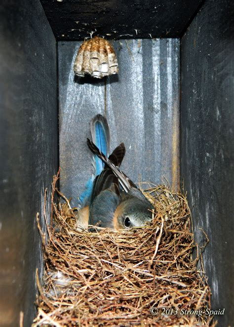 where to place bluebird house bluebird house with chandelier before i forget