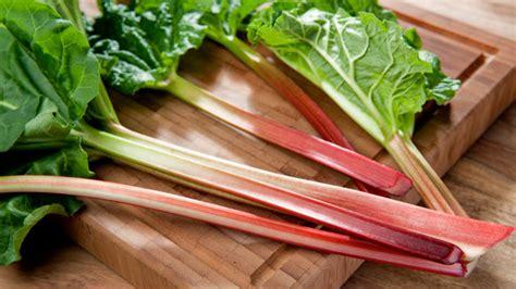 salat pflanzen ab wann rhabarber pflanzen und ernten ab wann