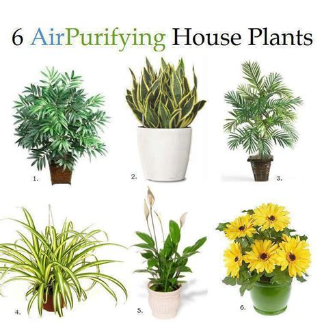 inside home plants how to grow cleaner air inside your home