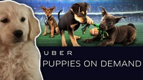 uber puppies missinfo tv 187 for a limited time uberpuppy will deliver s best friend