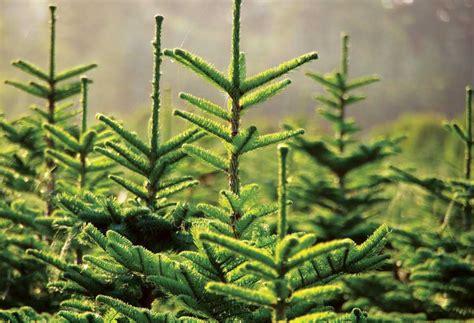 environmentally friendly trees environmentally friendly decorating ideas