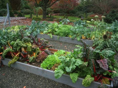 Fall Vegetable Garden Ideas Shade Tolerant Vegetables Growing Vegetables In A Shady