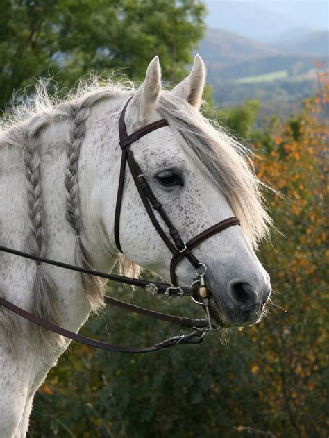 an andalusian andalusian al andalus