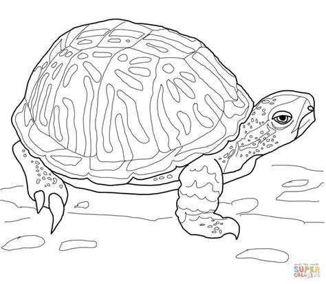 turtle eggs coloring page box turtle coloring page