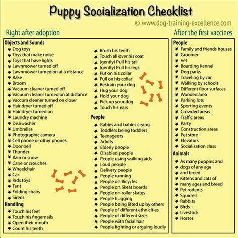 puppy socialization puppy clicker socialization