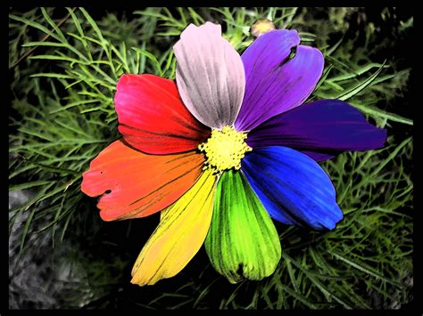 flower wallpaper and backgrounds rainbow flower wallpapers wallpaper cave