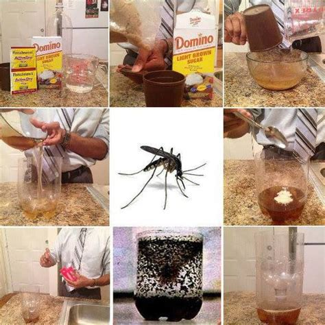mosquito trap diy yeast 1000 images about 2 liter diy crafts on