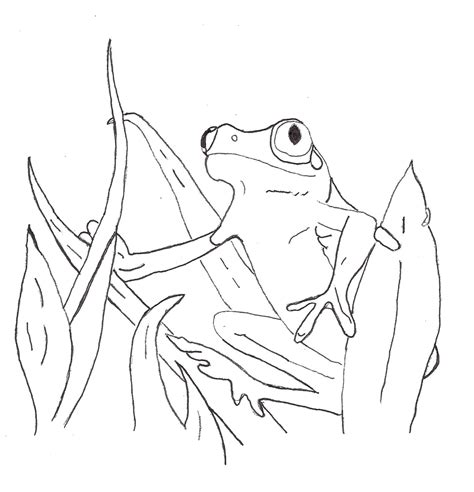 coloring pictures of tree frogs free printable frog coloring pages for kids